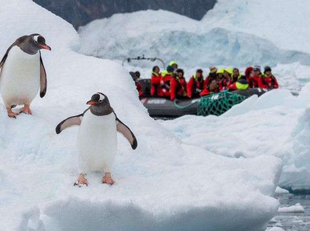 Neko Harbour. Ved enhver mulig lejlighed arrangerer Ekspeditionsteamet sejlture i RIB-både mellem isbjergene og ture til land for at komme tæt på områdernes ekstraordinære natur.