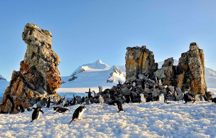 Pingviner på Half Moon Island. Tag med i land for at møde pingvinerne i deres livlige kolonier og nyd at sejle i RIB-både mellem isbjergene for at se hvaler og sæler.