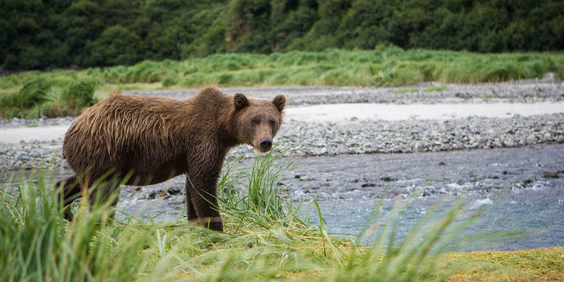 Geographic-Harbour_Katmai-National-Park-and-Preserve.jpg
