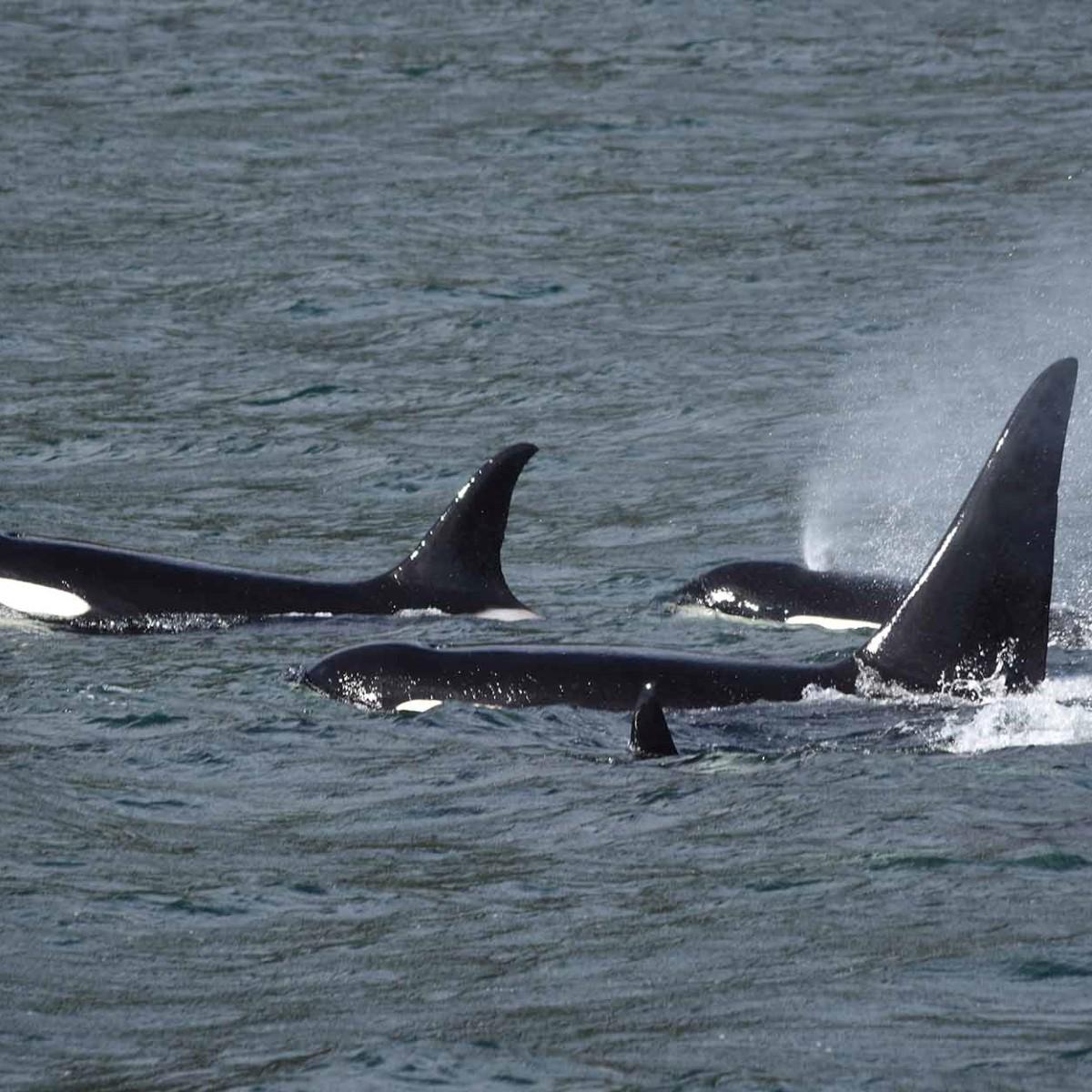 På udkig efter hvaler, brune bjørne og andre dyr | Hurtigruten DK